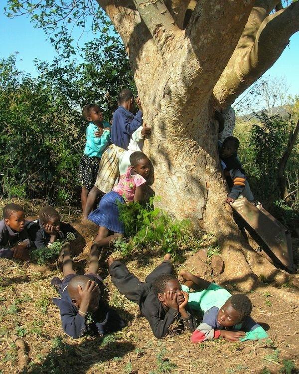 Niños se abrazan a un árbol de Treedom en Kenya.