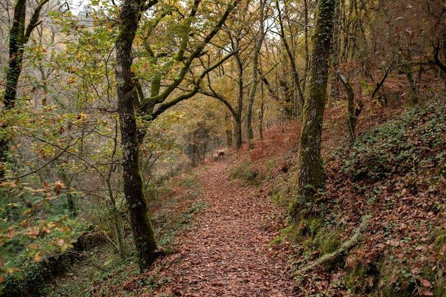España apuesta por la gestión de los bosques para impulsar economía y salud