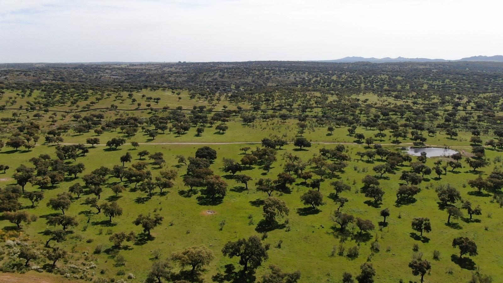 La Diputación Badajoz llama a preservar el patrimonio medioambiental de la dehesa. CEDIDA
