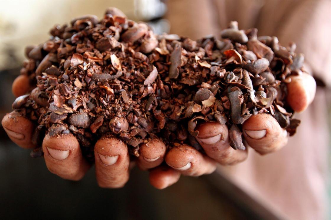 Ábrego y 20 jóvenes de la etnia Ngäbe Buglé crearon la Asociación Ñobä (Añobä) con el fin de crear sistemas agroforestales de cultivo de cacao. EFE/ Ernesto Mastrascusa/Archivo