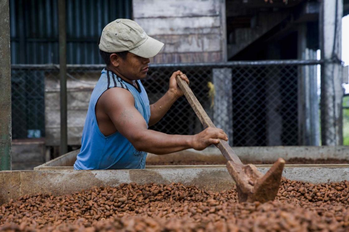 Un hombre mueve manualmente las semillas de cacao para que no se dañen por la humedad, en el municipio Matiguas de la ciudad de Matagalpa (Nicaragua). EFE/Jorge Torres/Archivo