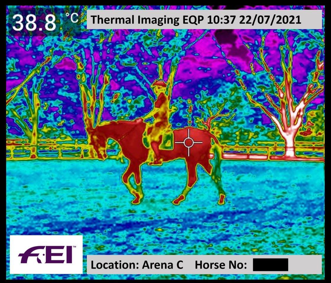 Ejemplo de la monitorización de la temperatura de los caballos con cámaras termográficas en los JJOO de Tokio. FEI