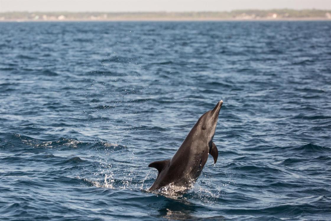 Según The Pew Charitable Trusts, dado que solo el 1 % de la alta mar está protegida, sería prácticamente imposible alcanzar el objetivo de proteger el 30 % de los océanos del mundo sin incluir la alta mar. EFE/Esteban Biba/Archivo